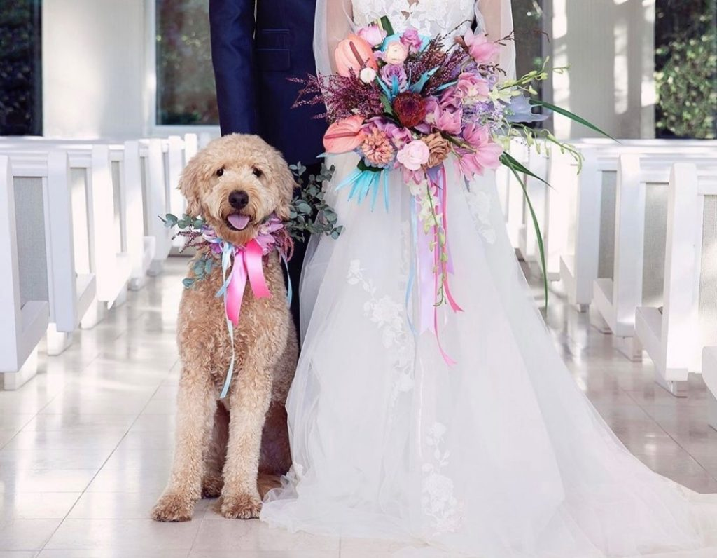 Mood-lifting florals from theflowershoppryor are THE MOVE. Oh, and furry friends walking down the aisle. Also *very much* the move.